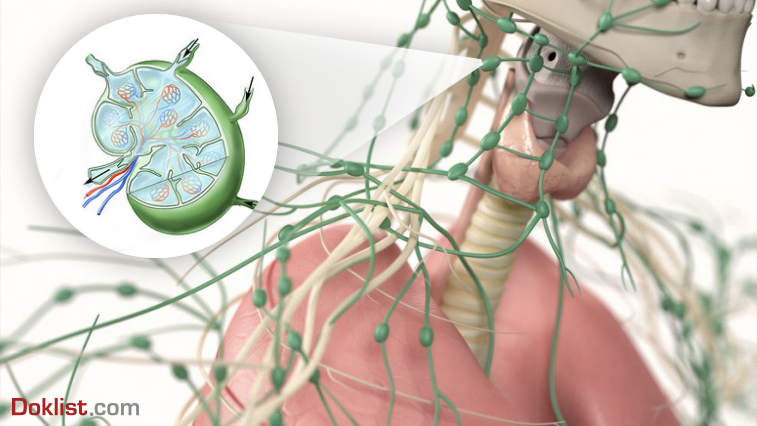lymphic node