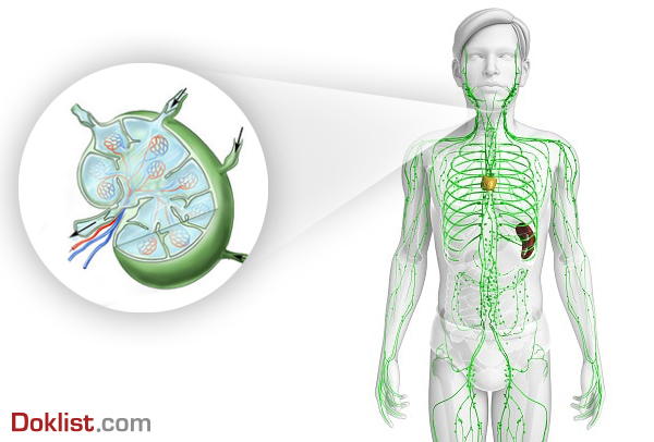 lymphic system